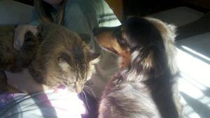 Fred&Murphy
